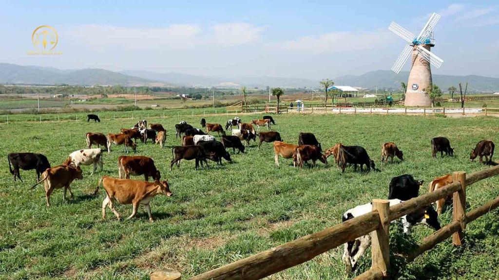 Chuyển đất trồng lúa sang trang trại chăn nuôi