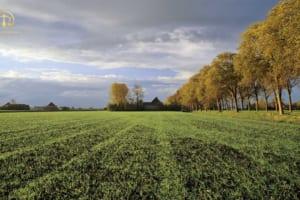 Chuyển nhượng đất là rừng sản xuất