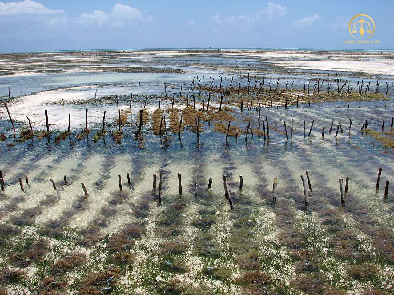 Đổi sử dụng đất rừng sản xuất sang đất nuôi trồng thủy sản